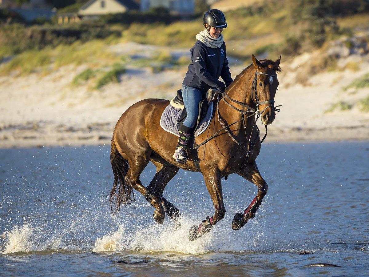 Horse-riding at Hales Hall